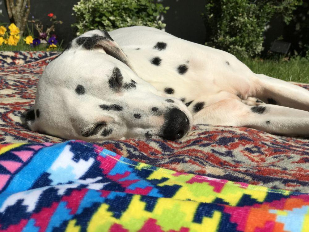 Lily sunbathing